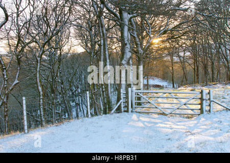 Morning sunlight through a Sessile Oak (Quercus petraea) woodland after a snow. Powys, Wales. January. - Stock Photo
