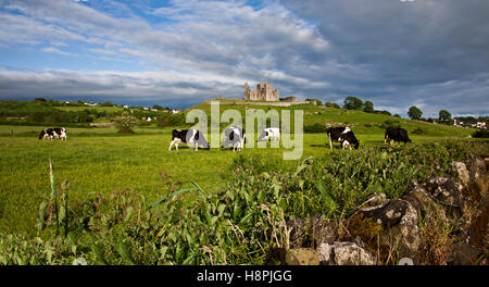 Rock of Cashel Castle with Holstein dairy cows grazing in a field,  blue sky, County Tipperary, Ireland countryside - Stock Photo
