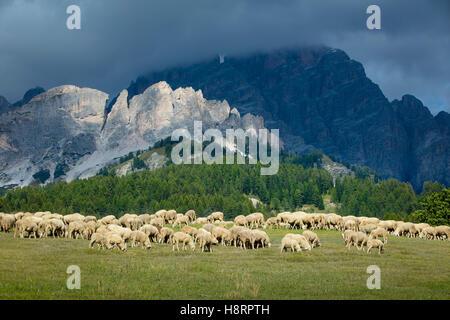 Sheep grazing on a hillside below peaks of the Dolomite Mountains near Cortina d'Ampezzo, Veneto, Italy - Stock Photo