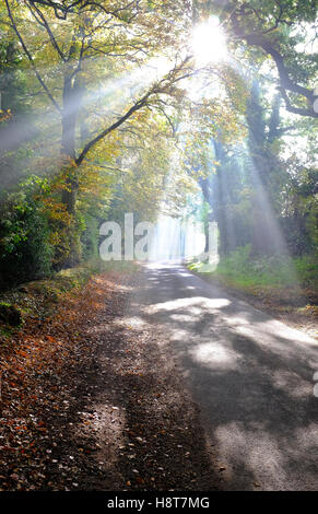 sunlight streaming through autumn woodland trees - Stock Photo