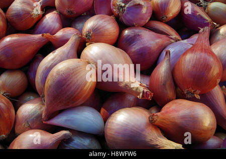 Shallots piled for market - Stock Photo