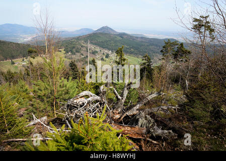Forest destroyed by the 1999 storm - Vosges France - Stock Photo