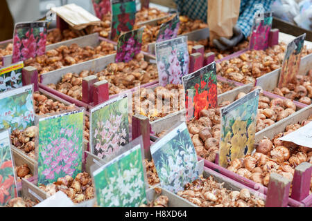 Flower bulbs on sale at Orticola fair in Milan, Italy. Orticola is an annual exhibition and fair of plants and flowers. - Stock Photo