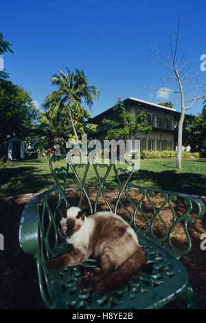 The Ernest Hemingway Home and Museum cats. Key West. Florida. USA - Stock Photo