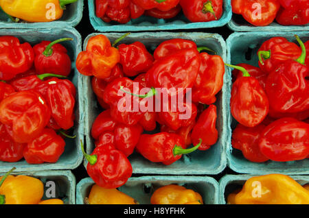 Red habanero  chili peppers in green market containers seen from above pattern - Stock Photo