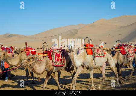 Group of camels for ride at sand dunes in Gobi desert, China - Stock Photo