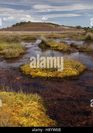 Bog pools and vegetation on Middlebere Heath, Hartland Moor NNR, Dorset. - Stock Photo