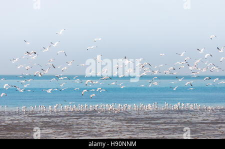 Group of seagulls fly over wet clay surface due to water decrease near wetland beach on overcast day. - Stock Photo