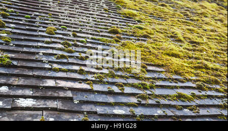 Old Stone Roof Tiling With Green Moss Growing On It, Photo Background With  Selective Focus