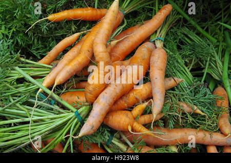 Farm fresh shapely carrots and carrot tops - Stock Photo