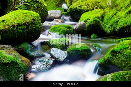 Cascading Waterfall Fresh Nature Green Environment Concept - Stock Photo