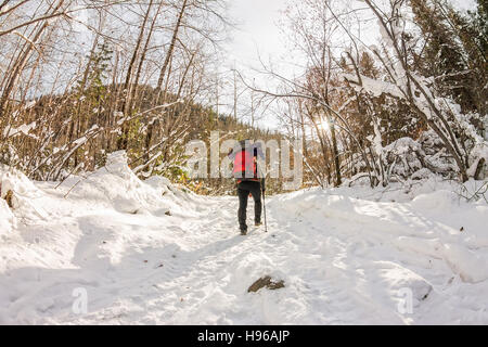 Girl backpacker walking on a forest road in the winter forest in the mountains. - Stock Photo