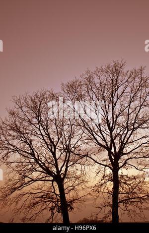 Warm evening sunlight falling on trees - Stock Photo