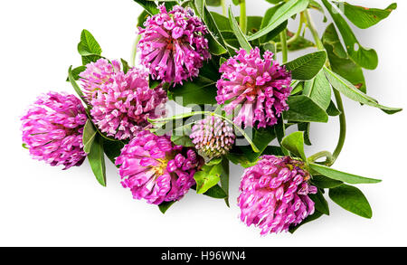 Bouquet of clover flowers with green leaves isolated on white background - Stock Photo
