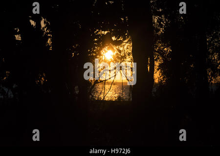 An orange sunset silhouetting tree over the ocean. - Stock Photo