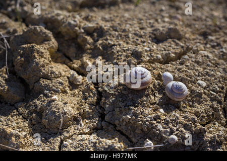 Empty shells on the cracked sandy ground, in calm beige colours