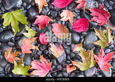 Fallen Colorful Maple Leaves laying Randomly on the Rocky Ground Fall Conceptual view - Stock Photo