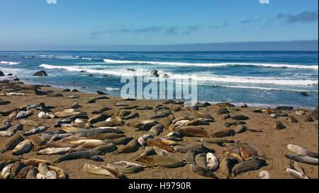 Elephant seals, Point Piedras Blancas, San Simeon, California - Stock Photo