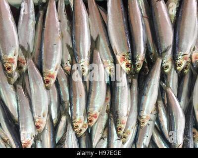 Close up of fresh sardine fish or local called JIkan Tambah on display at fish market. - Stock Photo