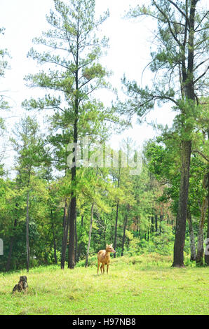 A doe (female) deer standing in the midst forest - Stock Photo