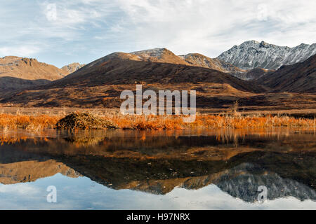 A beaver lodge and pond reflecting the fall colors of the Alaskan Range mountains - Stock Photo
