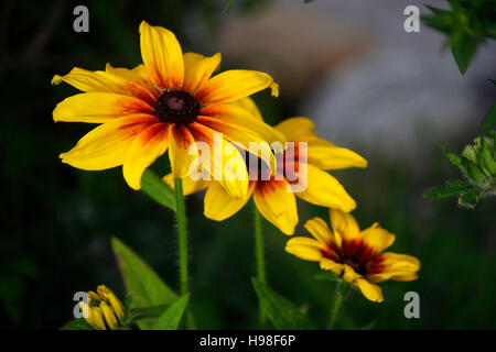 Blume, Alpen, Oesterreich. - Stock Photo
