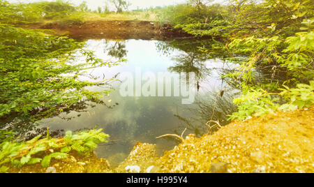 Unclean water in hot southern areas. Boggy lake (pollution) with bushes (shrubby acacia). Prairie. Karnataka. India - Stock Photo