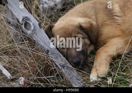 A stray puppy laying on a grass. - Stock Photo