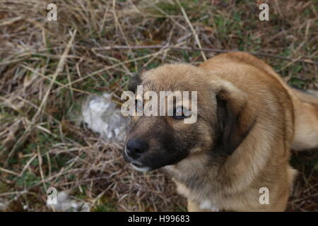 A stray puppy looking up. - Stock Photo