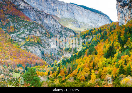 Mountain and forest. Bujaruelo Valley.  Pyrenees, Huesca, Spain, Europe - Stock Photo