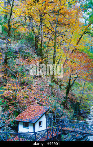 Forest and hut. - Stock Photo