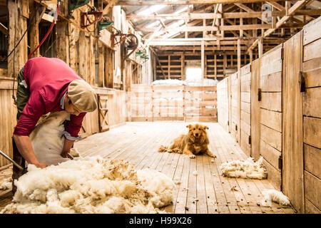 Patagonia Sheep Farming - Stock Photo