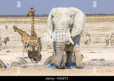 Etosha National Park - Stock Photo