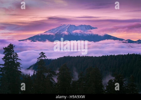 View of Mount St Helens sunset from McClellan Viewpoint in Gifford Pinchot National Forest Washington - Stock Photo