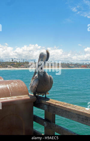 Brown pelican in Oceanside pier, Oceanside, California. - Stock Photo