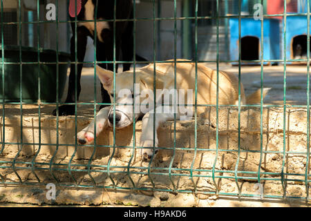Sad white homeless dog in a big cage - Stock Photo