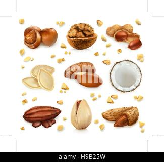 Nuts in the shell, vector icon set - Stock Photo