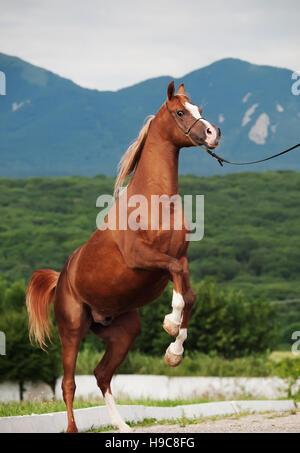Wild Black Stallion Horse Rearing Animal Wall Decor Art