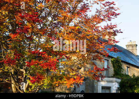 Sorbus. Rowan tree full of berries in autumn. Bourton on the Water, Cotswolds, Gloucestershire, England - Stock Photo