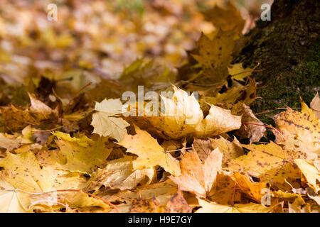 Colourful Autumn leaves. - Stock Photo