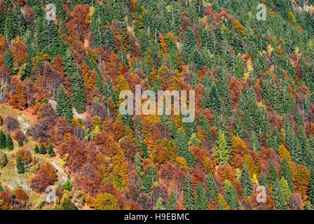 colored forest  mountain in fall, nature background - Stock Photo