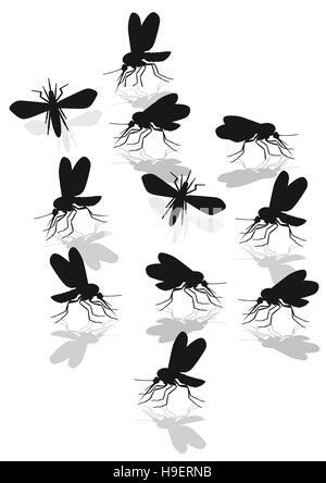 mosquitoes plague, gnats, midges