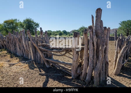 Traditional wooden kraal or enclosure for cattles of Himba tribe people - Stock Photo