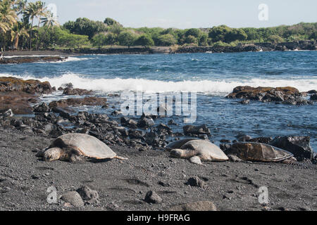 turtles sunning on Punauu black sand beach in Hawaii - Stock Photo
