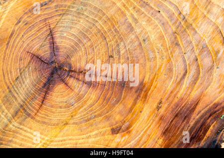 Old and wet cut down a tree with annual rings close-up