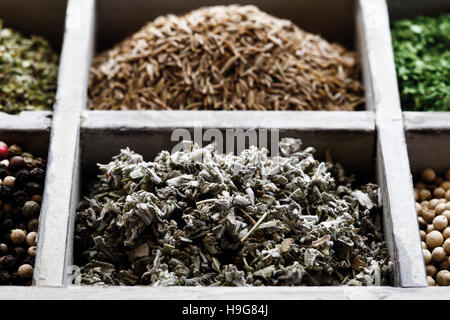 Spices in a case, sage - Stock Photo