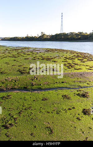 Mud covered with algae at low tide on river Medina, Isle of Wight, UK - Stock Photo