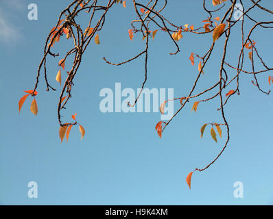 Abstract black and white colour silhouettes of tree branches against sky - Stock Photo