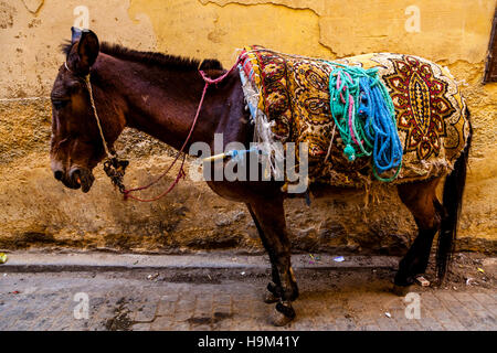 A Donkey In The Medina, Fez el Bali, Fez, Morocco - Stock Photo