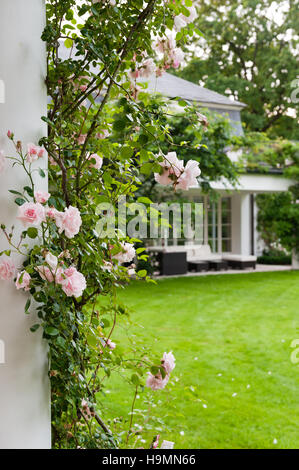 Pink climbing rose and white exterior in  grounds of German home - Stock Photo